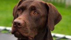 nanook el perro que salvo a un hombre de morir ahogado