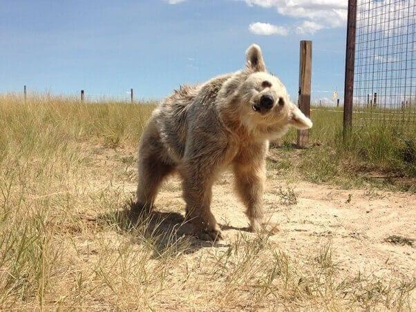 oso-polar-09