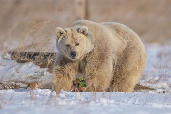 oso-polar-10