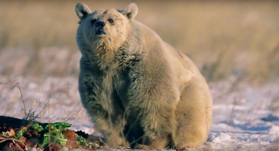 oso-polar-11