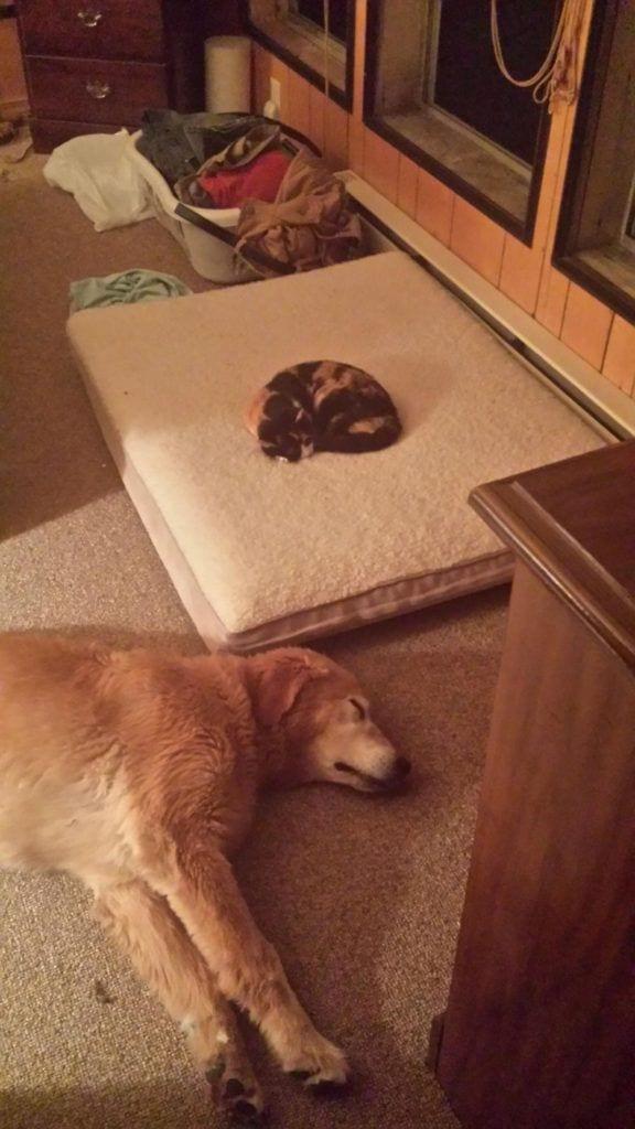 perro-cama-robada-gatos-02