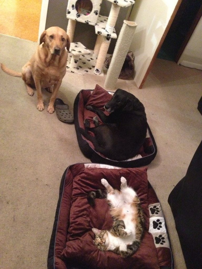 perro-cama-robada-gatos-03