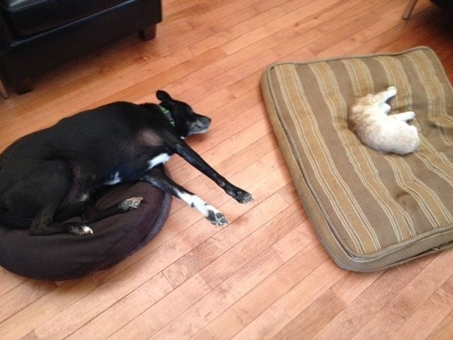 perro-cama-robada-gatos-08