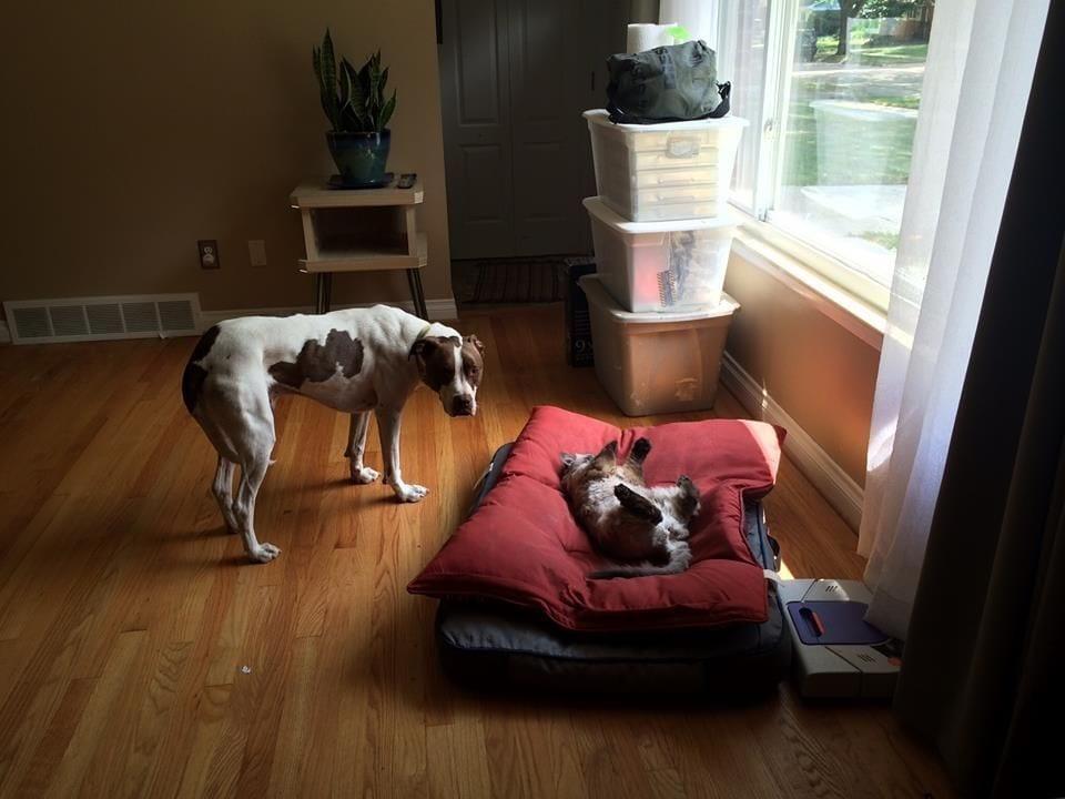 perro-cama-robada-gatos-10