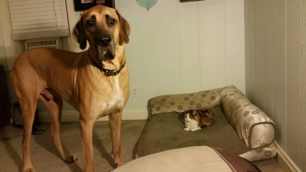 perro-cama-robada-gatos-11