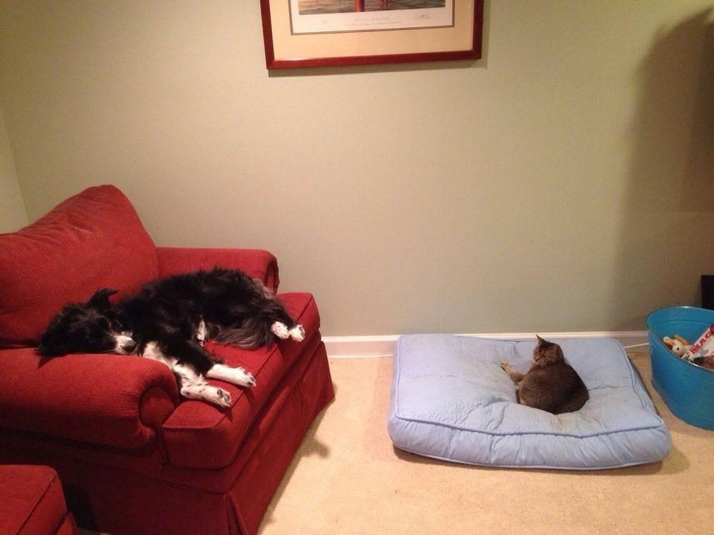 perro-cama-robada-gatos-15