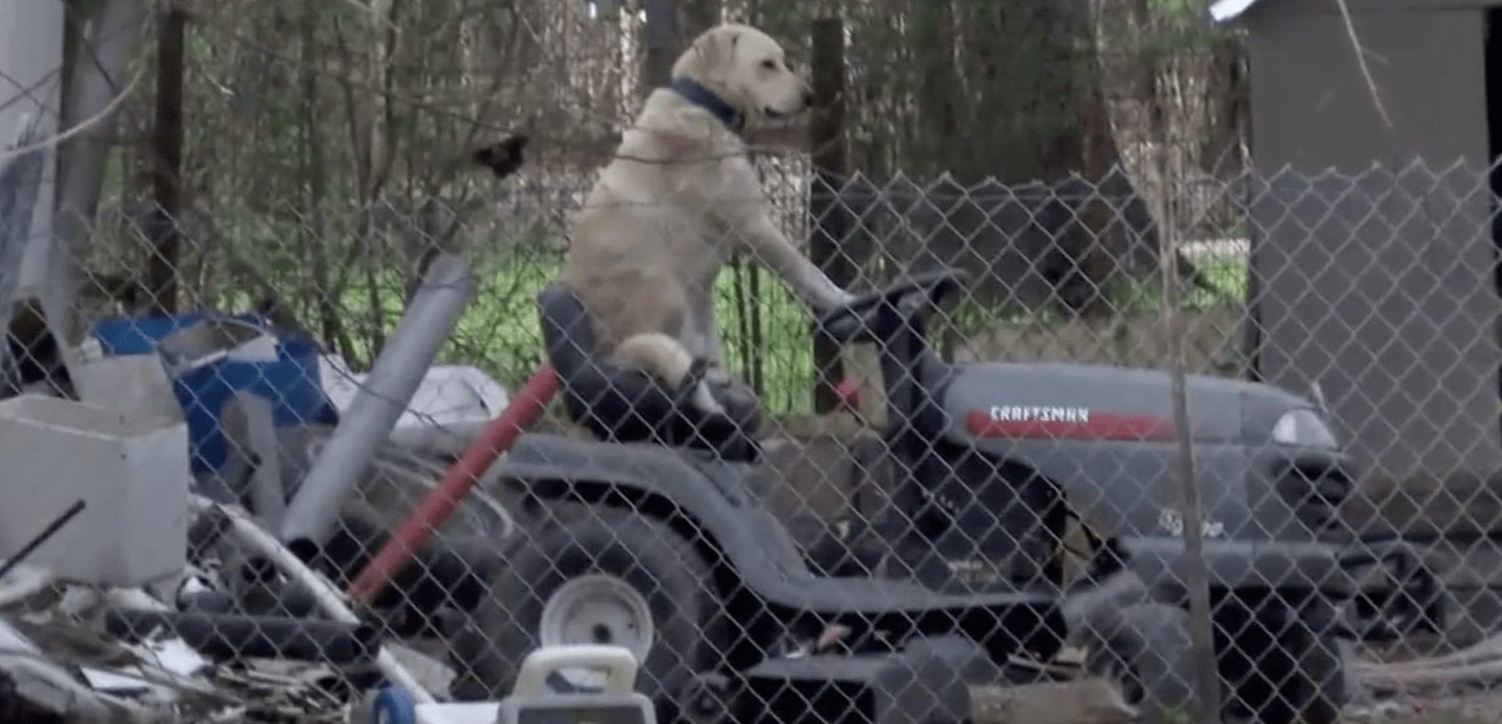 perro-jardinero-02