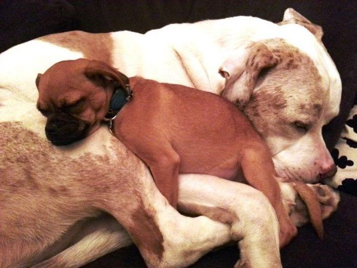 perro protege perros 03