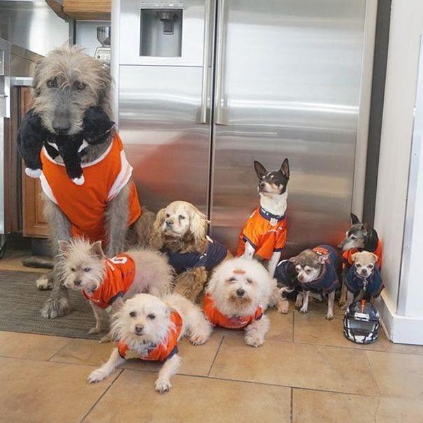 perros-mayores-adoptados-01