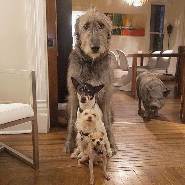 perros-mayores-adoptados-04