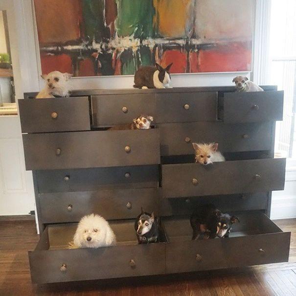 perros-mayores-adoptados-05