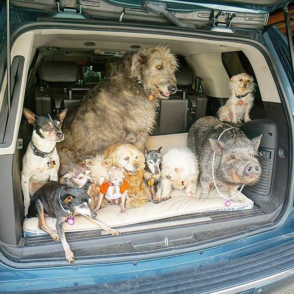 perros-mayores-adoptados-06