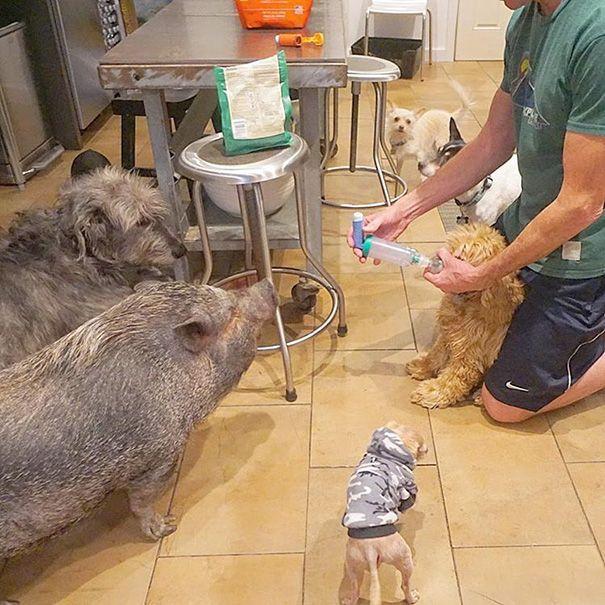 perros-mayores-adoptados-10