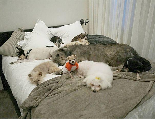perros-mayores-adoptados-11