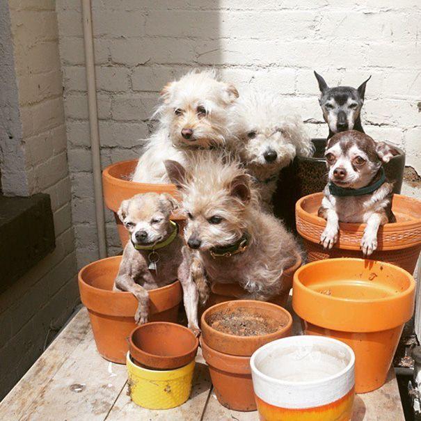 perros-mayores-adoptados-13