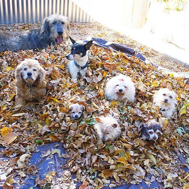 perros-mayores-adoptados-14