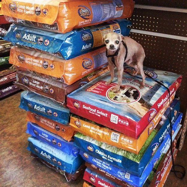 perros-mayores-adoptados-15