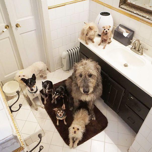 perros-mayores-adoptados-16