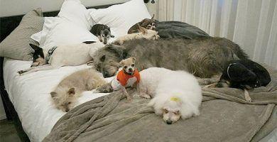 perros mayores adoptados destacada