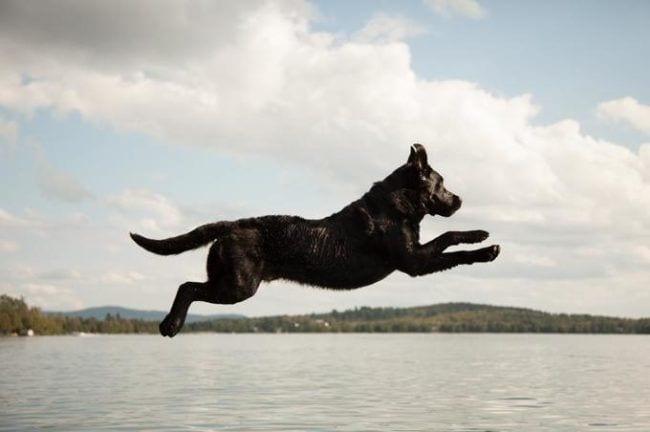 perros playa 07