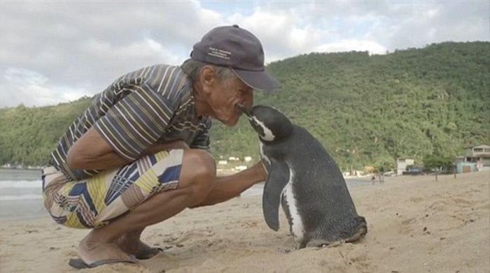 reencuentro pinguino 01