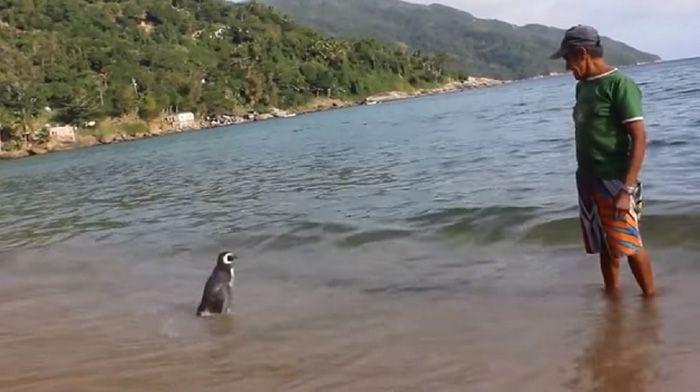reencuentro-pinguino-03