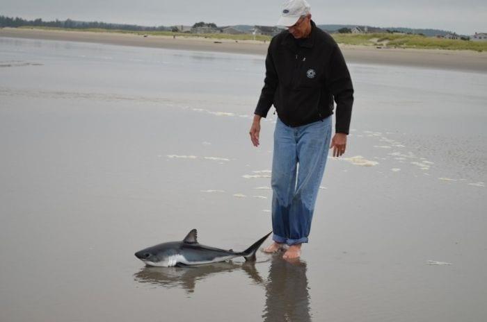 rescate cria tiburon 01