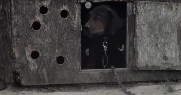 rescate perro besos