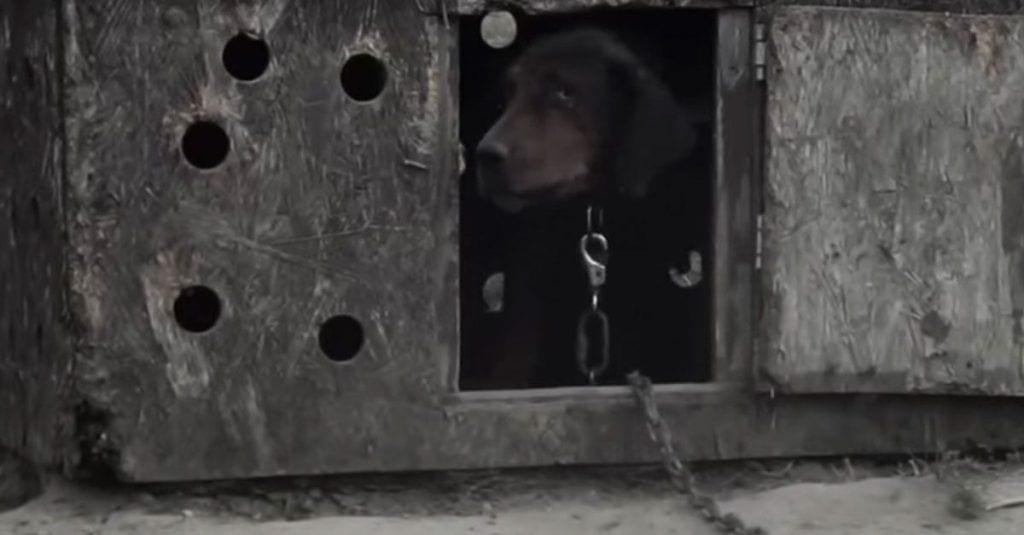 rescate-perro-besos