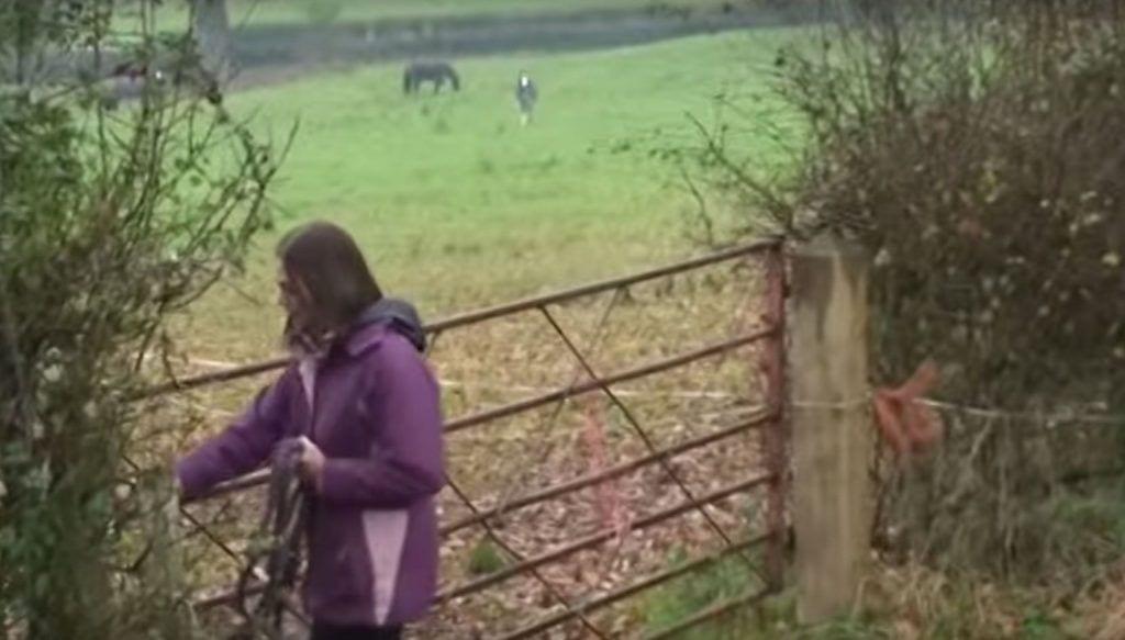 caballo-reencuentro