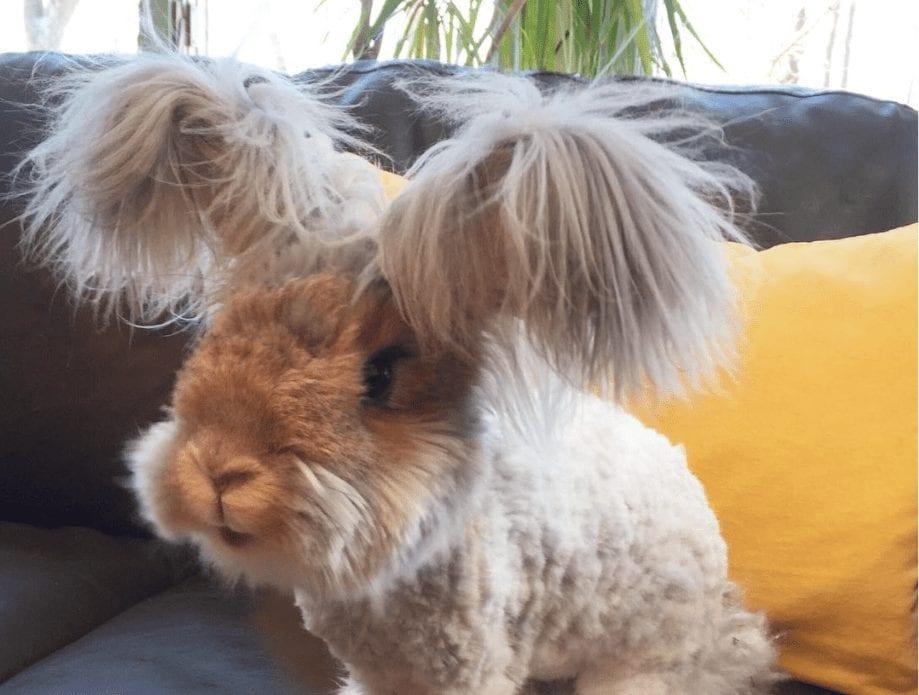 conejo-feliz3