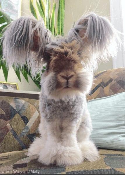 conejo-feliz4