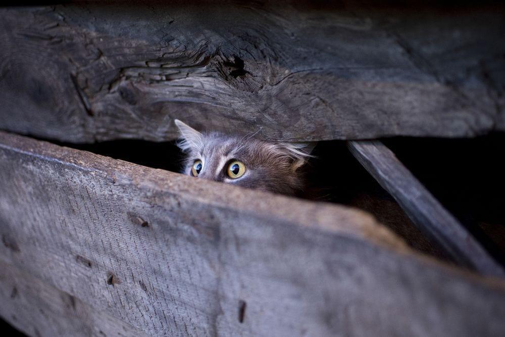 gato-huyendo