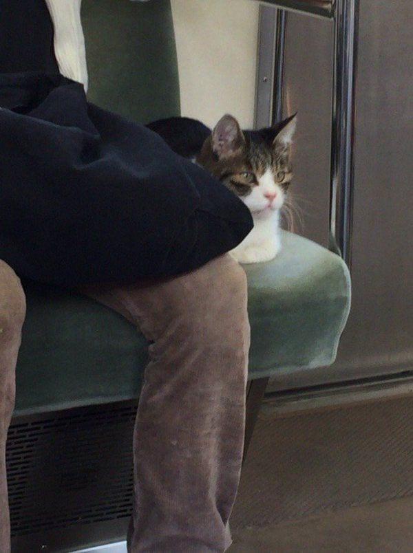 gato-metro-tokio-02