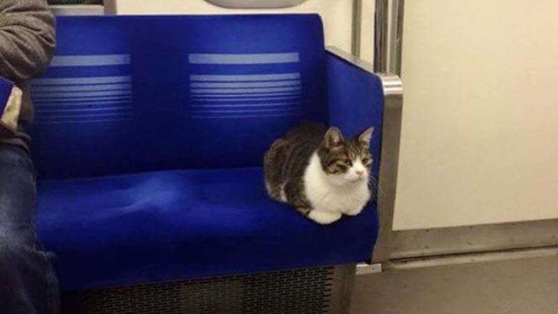 gato metro tokio 03