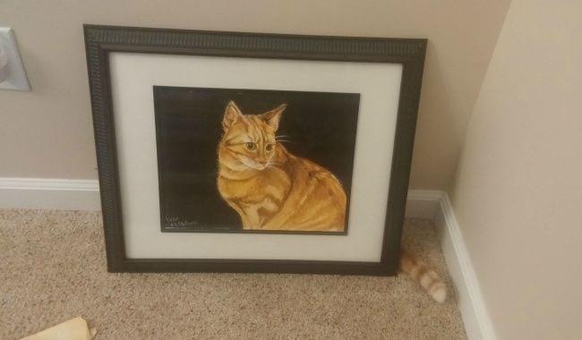 gato posturas1
