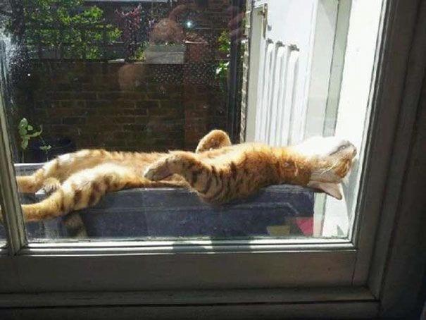 gatos buscando calor 02