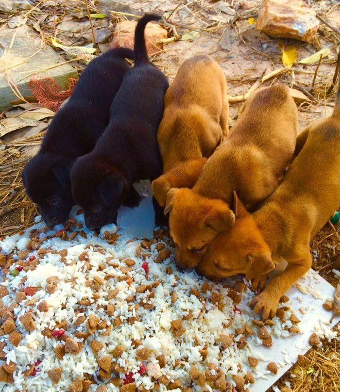 hombre-da-de-comer-80-perros-13