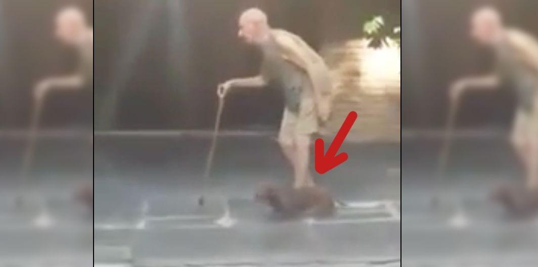 hombre perro paseo destacada