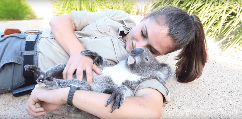 koala cuidadora 02