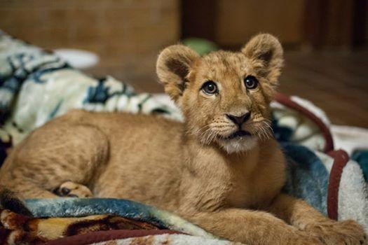 leon-rescatado-02