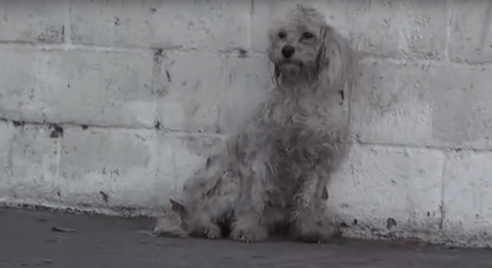 perra-abandonada