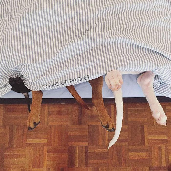 perro-adoptado-06
