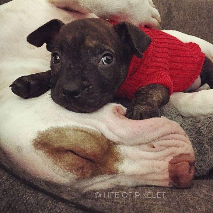 perro-adoptado-07