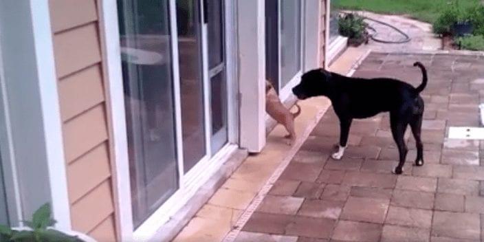 perro-cachorro1
