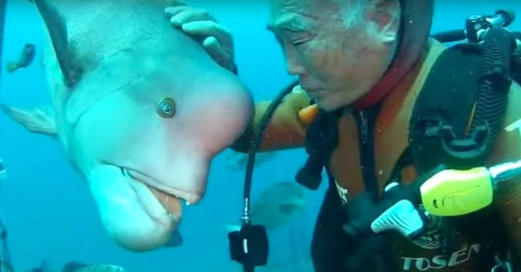 pez amoroso japon