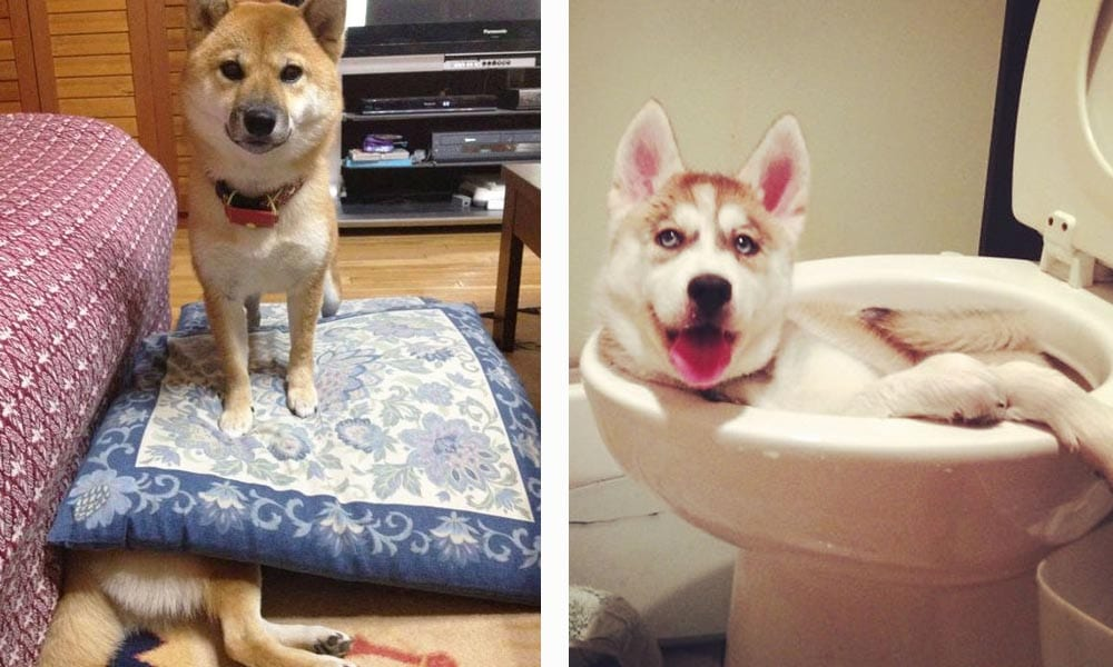 travesuras perros destacada
