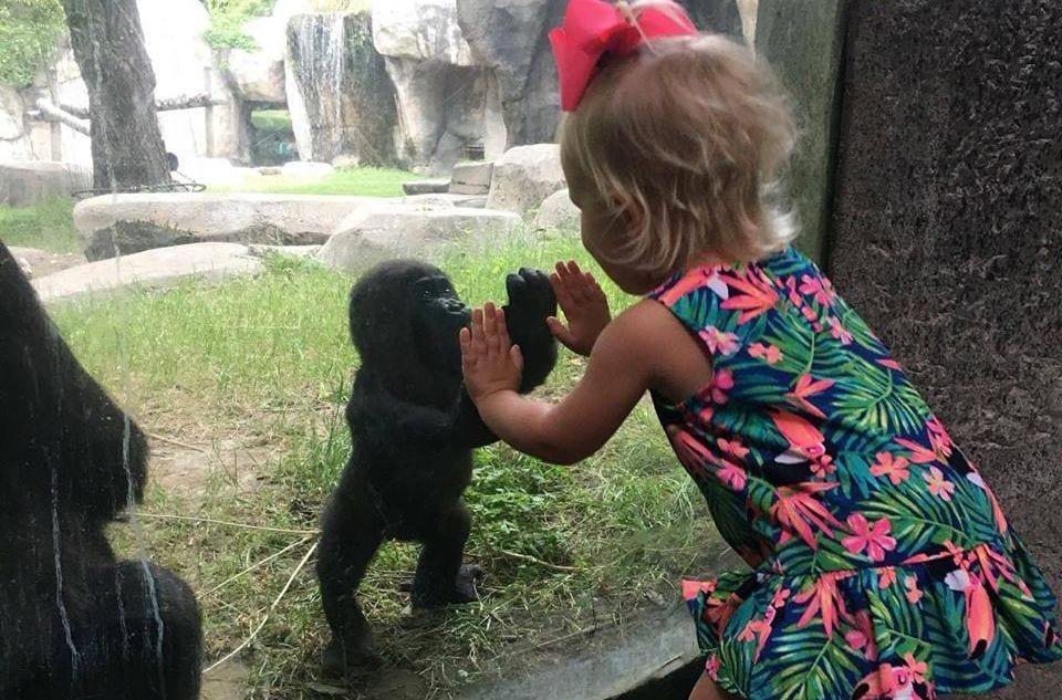 bebe gorila destacada