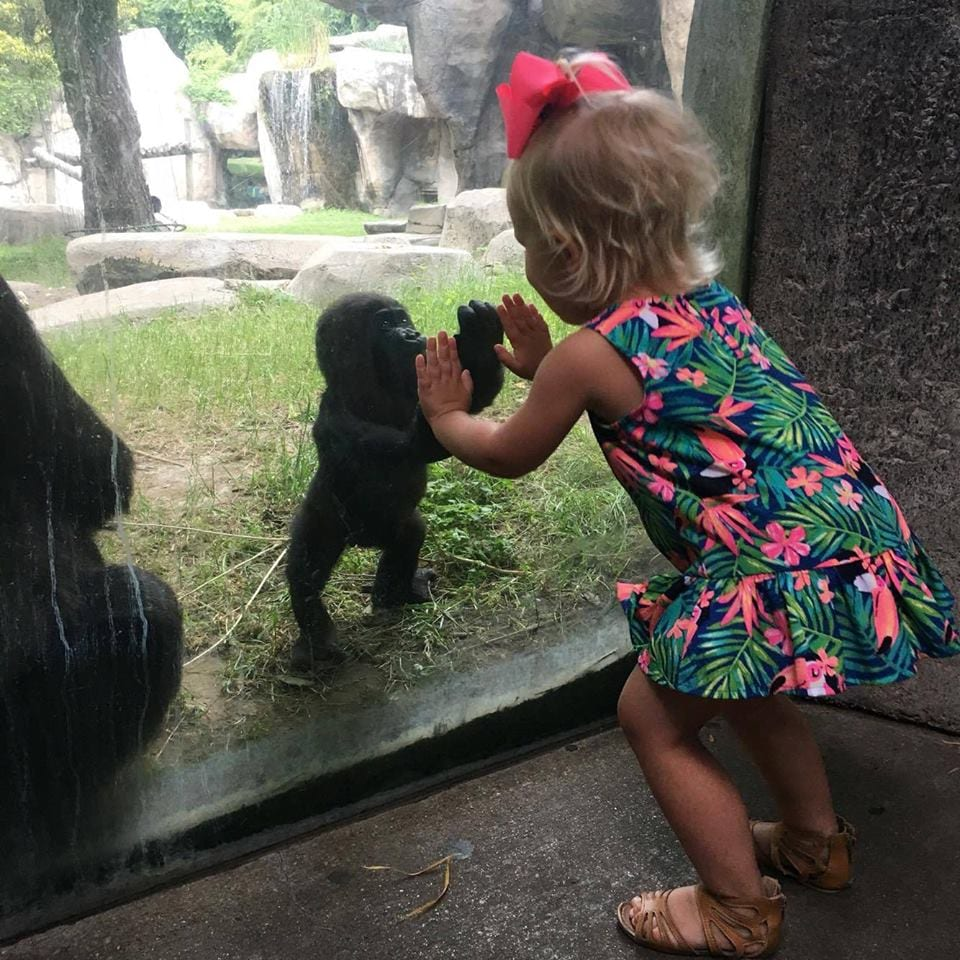bebe-gorila