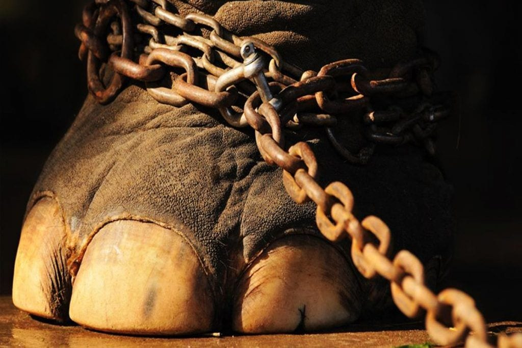 circos animales 02